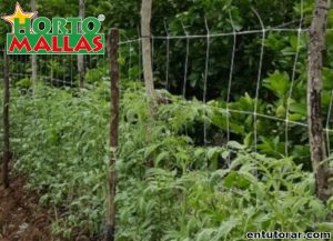 Varas de madera y malla tomatera en campos de cultivo